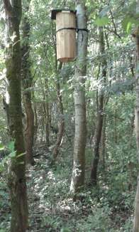 Natural Beehive in Squirrel Wood